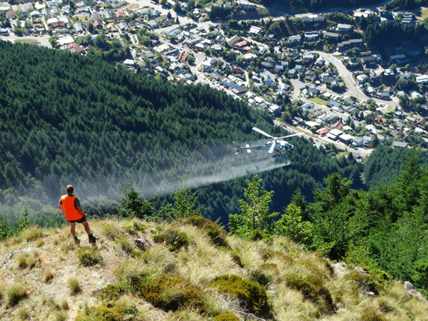 Department of Conservation ranger Brenton Wilson watches as a helicopter sprays wilding conifers above Fernhill, Queenstown in January 2015.  Photo: ODT