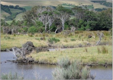 Kahikatea and silver beech remnants in the Catlins River Wetland (March 2010)